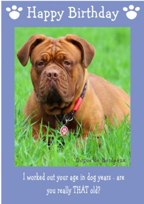 "Dogue de Bordeaux-Happy Birthday - ""Are You Really THAT Old"" Theme"